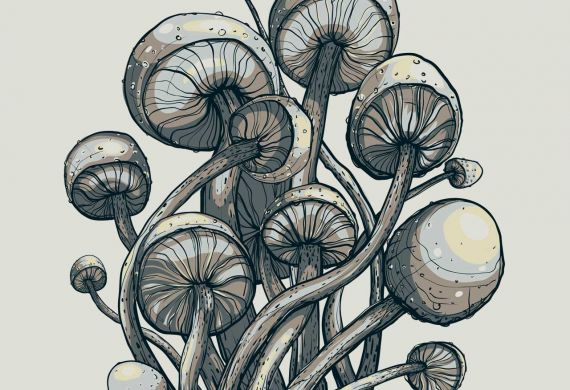 mushrooms_featured