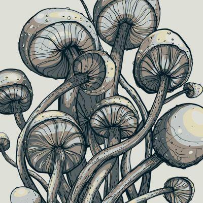 mushrooms_featured